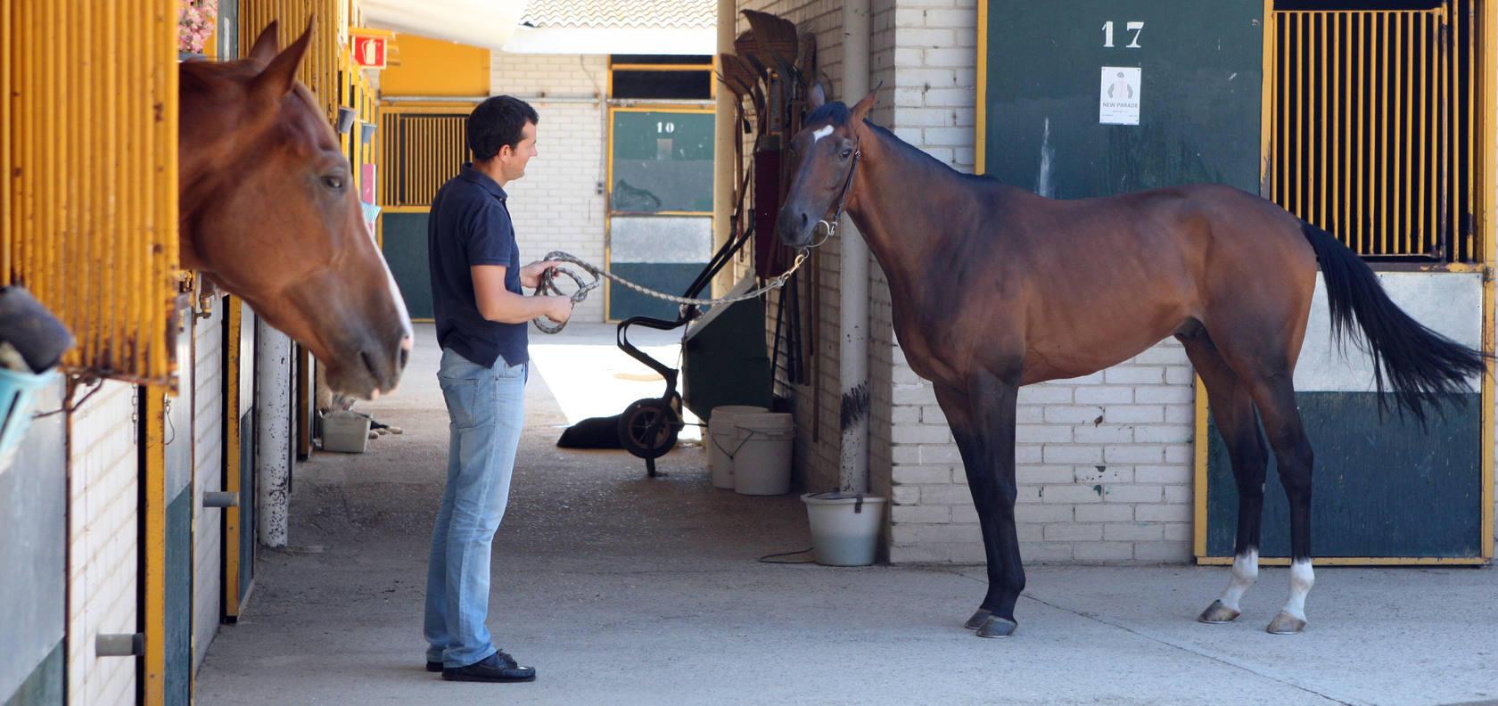 Achtung, el caballo que voló sobre el suelo de Madrid