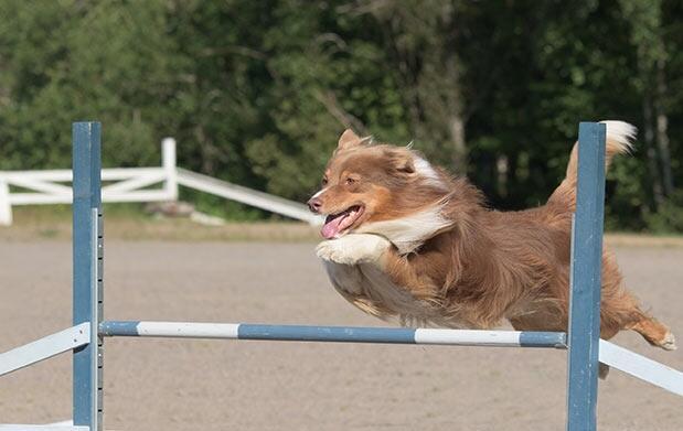 Educa a tu perro ¡adiestramiento canino!