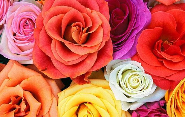 Ramo de rosas de colores para el día de la Madre