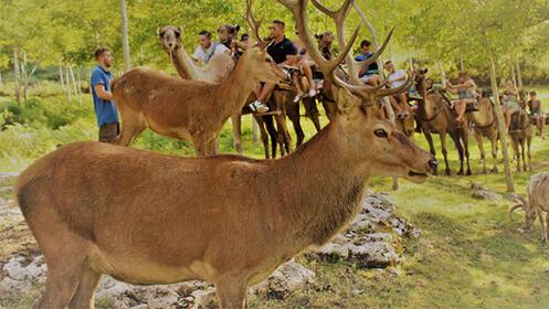 Safari Aventura con ruta en dromedario por 22€
