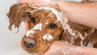Baño para mascotas en Tu Estilo