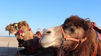 Safari Aventura con ruta en dromedario por 25€